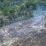 """Bolsonaro veut urbaniser la forêt amazonienne, jugée """"non productive"""""""