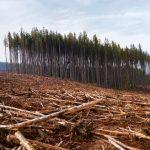 Les Français brûlent chaque année une forêt aussi grande que la Bretagne