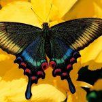 Le cauchemar en route d'un XXIIe siècle sans insectes