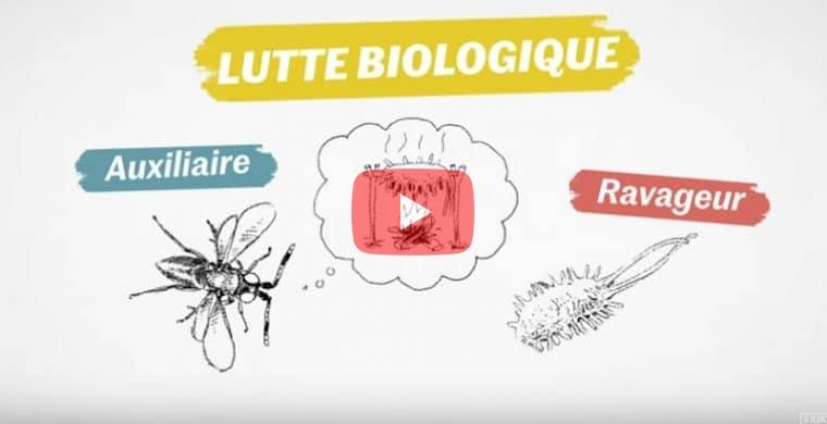 Protéger les cultures grâce à la lutte biologique (8′)